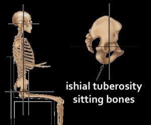 Sitting bones